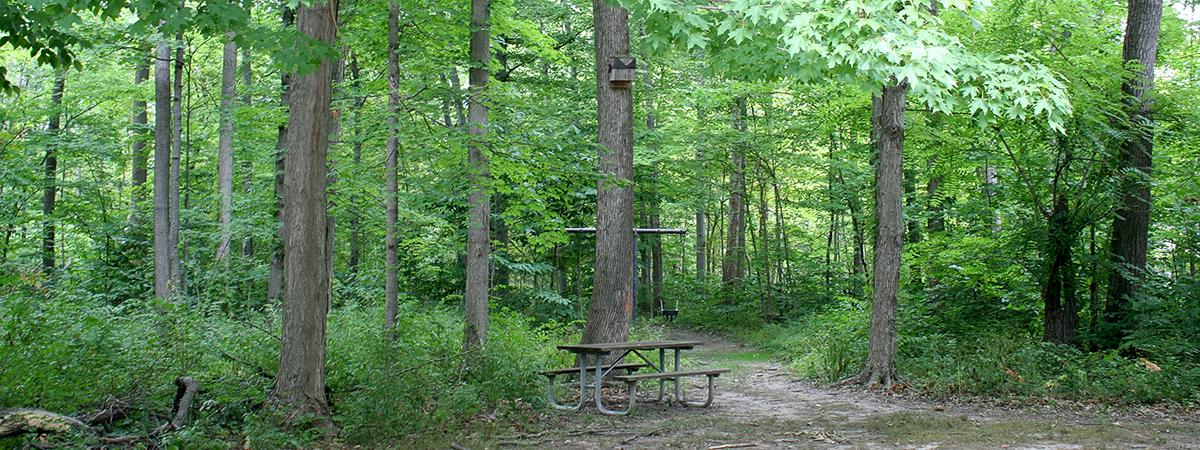 Nutt Woods Park