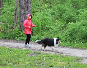 Dog walker in Grant Park, spring