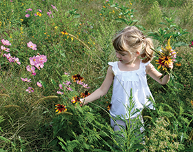Wildflowers at Bill Yeck Park