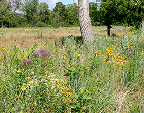 Pollinator habitat at Activity Center Park