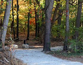 Bill Yeck Park Purple Trail -- added 2019