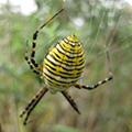 Spider Search