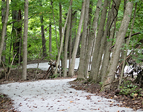 Bill Yeck Park limestone trail through the woods.