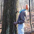 man looking at tree bark
