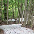 Bill Yeck Park purple trail