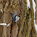 bird on snowy tree trunk