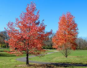 fall trees at Hithergreen Park