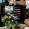 watering can watering a houseplant