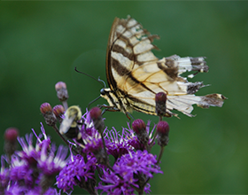 butterfly with tattered wings by David Goldstein